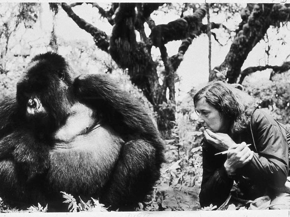 Ein Leben für die Tiere: Dian Fossey mit einem Berggorilla  | Foto: dpa