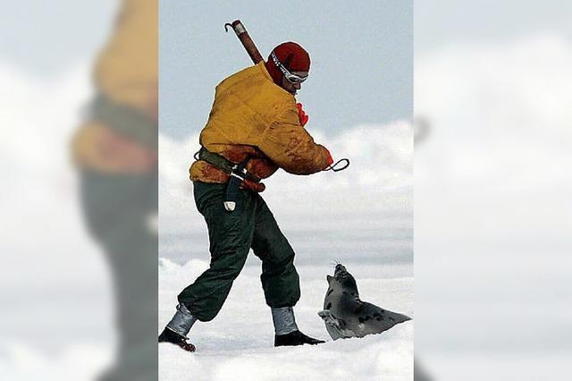 Koch eines indigenen Restaurants verursacht wegen Speisekarte Streit um Robbenjagd