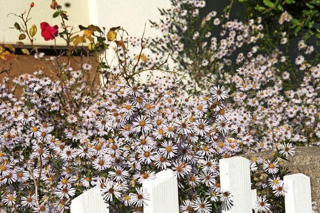Bienen-Paradies