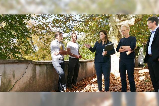 Denkmalpflege sticht Baumschutz