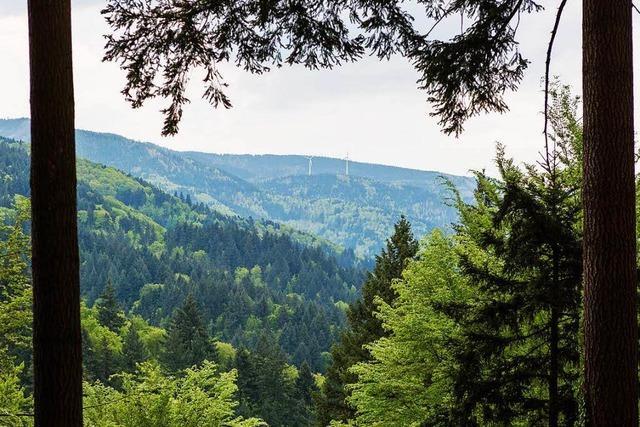 Wald in der Rheinebene ist ein Sorgenkind