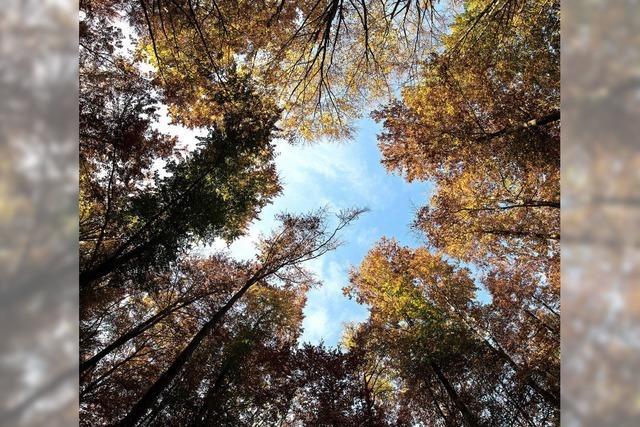 Gemeindewald erfreut mit schwarzen Zahlen