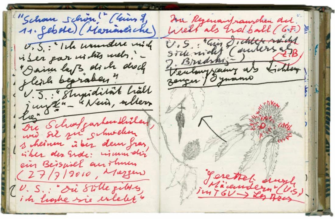 Kastanien, gezeichnet:  Seite aus den  Notizbüchern   | Foto: chris korner /DLA