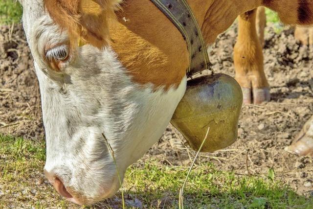 Nachbarn klagen über laute Kuhglocken