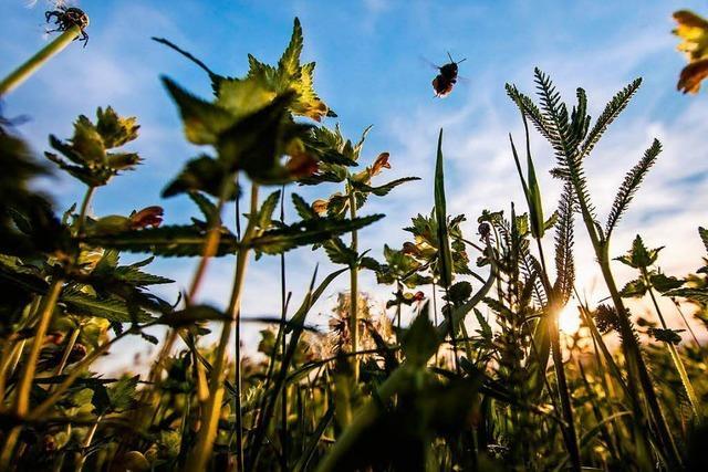 Freiburger Forscherin über die Studie zum Insektensterben