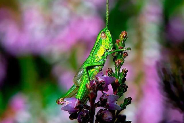 Alarmierender Befund: Die Insekten verschwinden