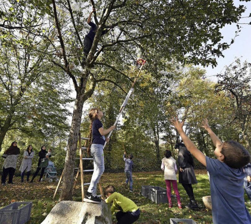 Bei der Apfelernte entlang der Boelcke...ige Erwachsene mit großem Eifer dabei.  | Foto: Thomas Kunz