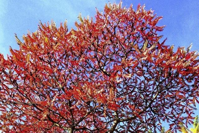 Im roten Herbstkleid
