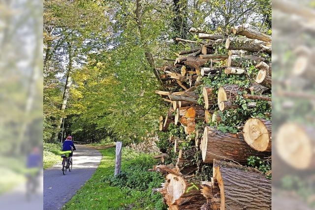 Geringeres Defizit im Wald