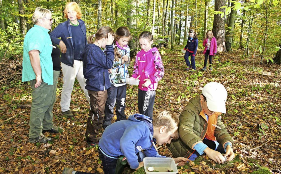 Wiechser Grundschüler sind an den Wald...aunlich, was sich alles finden lässt.   | Foto: Anja Bertsch