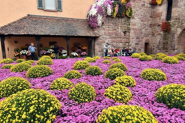 Lahrs Chrysanthema ist eröffnet