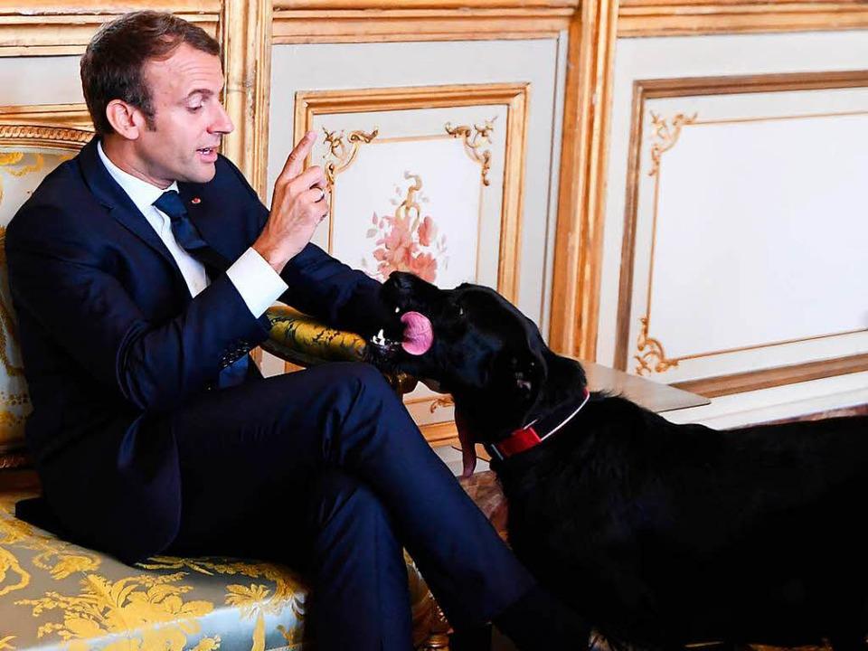 """Was befiehlt Macron seinem Hund in die...elst, dann lieber an den Kamin.""""    Foto: dpa"""