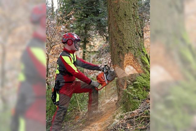 Mehr Nadelbäume für den Forst