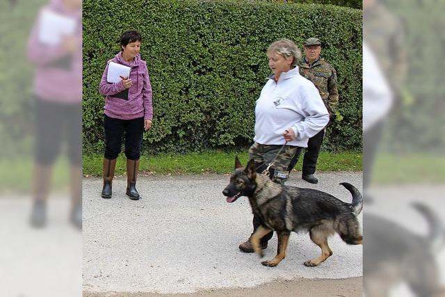 Hunde mit Auszeichnung
