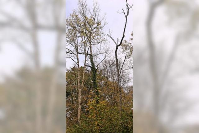 Marcher Wald bringt finanziellen Verlust
