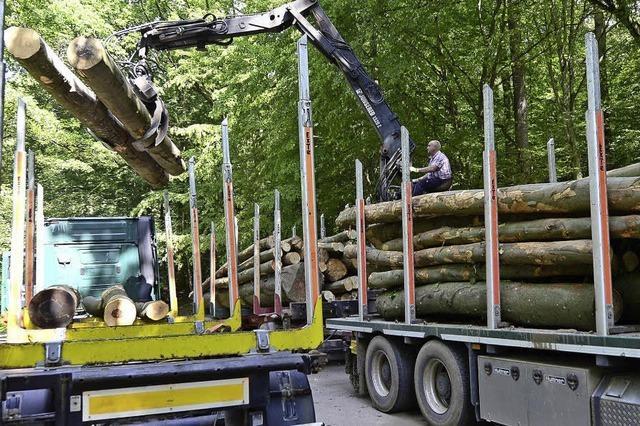 Bernau tritt der neuen Waldgenossenschaft Südschwarzwald bei