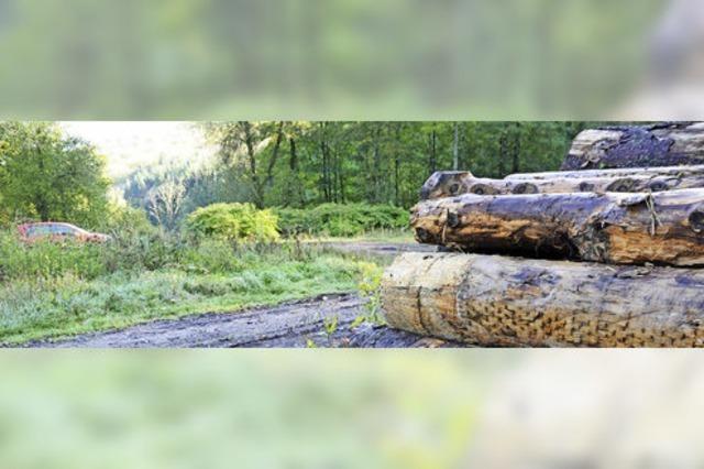 Knappes Votum für großes Holzlager