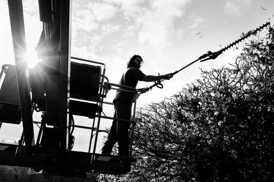 Beherzt: Arbeiter mit  motorbetriebener Heckenschere  | Foto: -
