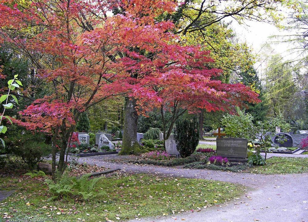 Markante Bäume prägen den Bergfriedhof...ollen nun Baumgräber angelegt werden.     Foto: Archiv