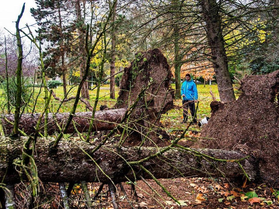 Sturmtief Herwart hat auch in Tschechi...nterlassen. Nun geht es ans Aufräumen.    Foto: dpa
