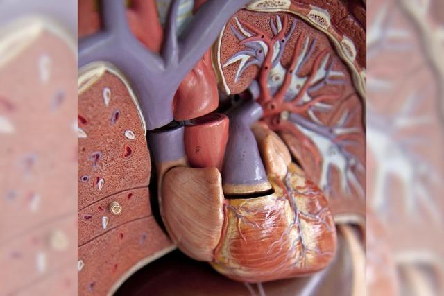Diagnose und Therapie bei Herzinsuffizienz