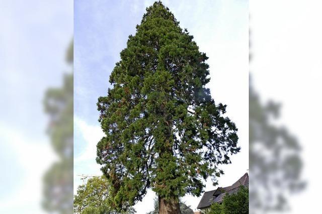 Eichseler Ortsvorsteher will mit Weihnachtsbaum ins Guinness-Buch