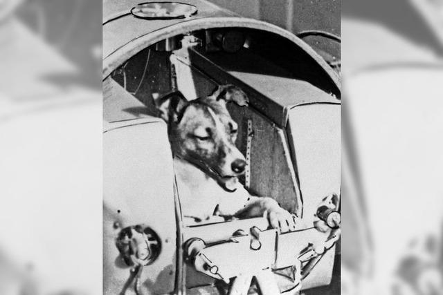 Vor 60 Jahren war Hündin Laika im All unterwegs