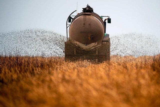 Nitrat-Grenzwerte in privaten Brunnen deutlich überschritten