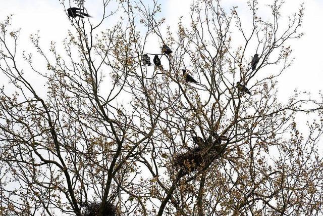 Warum fallen Vögel beim Schlafen nicht vom Baum?