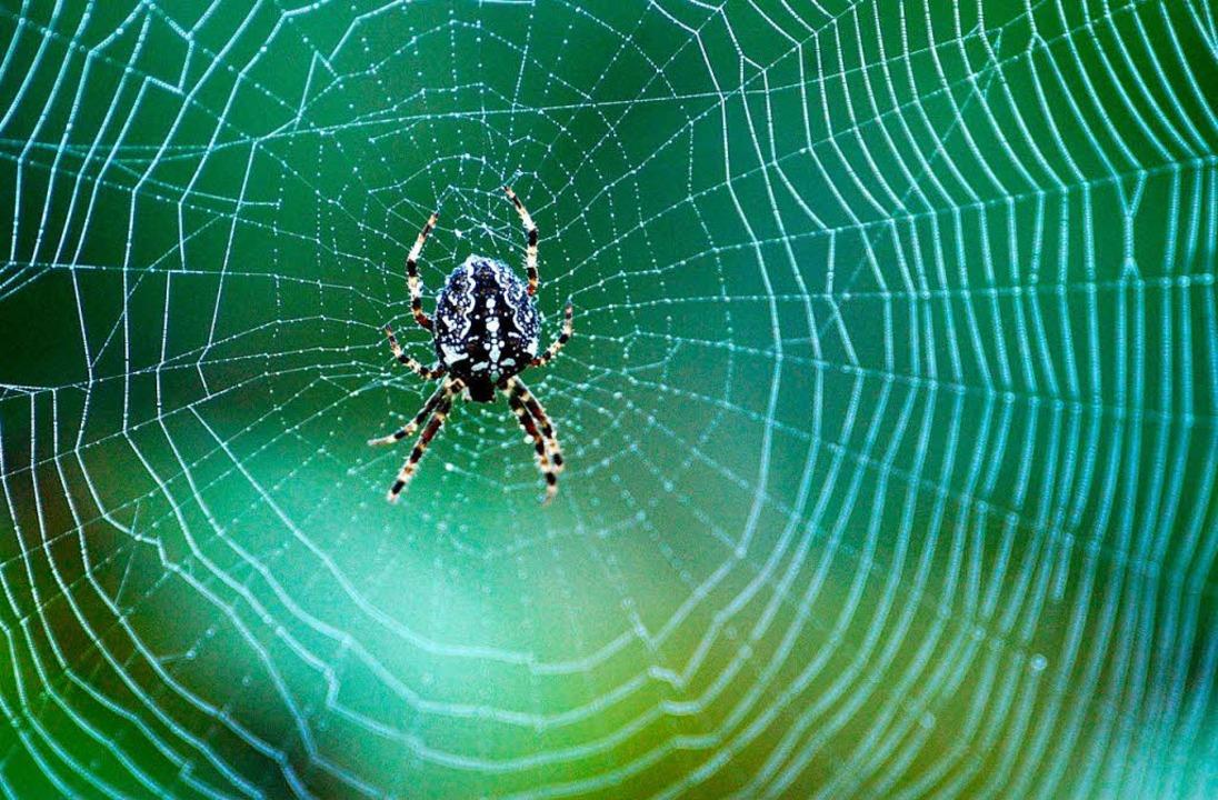 27 gratis spinnennetz mit spinne malvorlage  beste