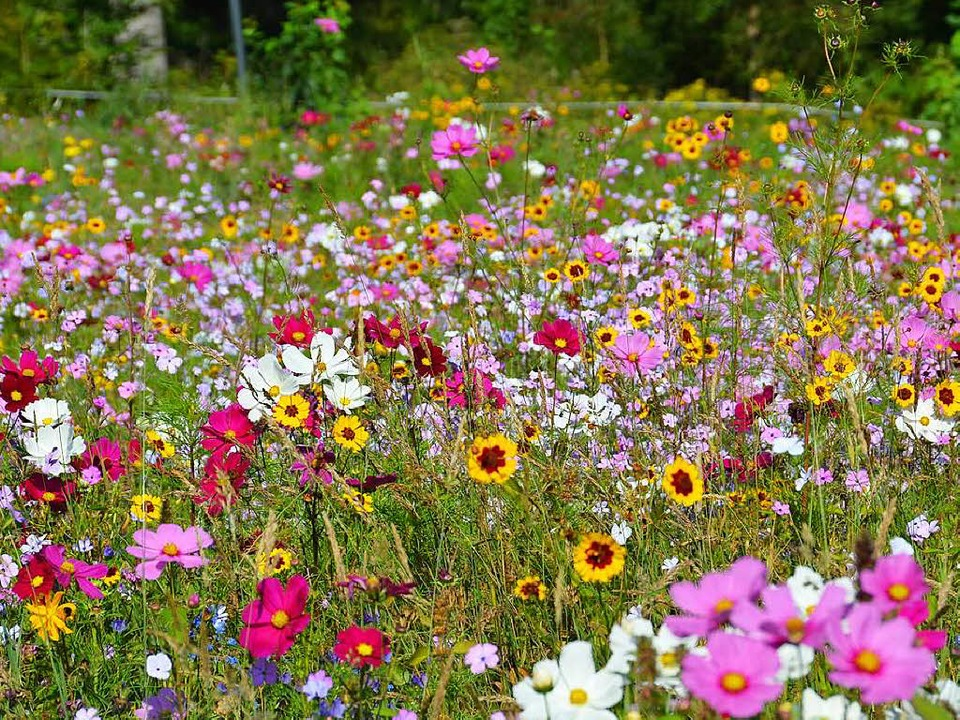 Eine artenreiche Wiese kann das Ökokonto füllen.  | Foto: Tanja Bury