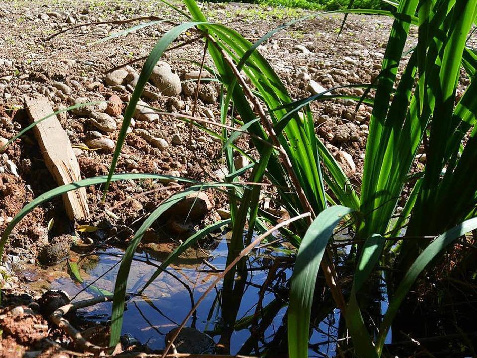 Ein Feuchtbiotop, das an der  Wiese angelegt wurde.  | Foto: Nikolaus Trenz