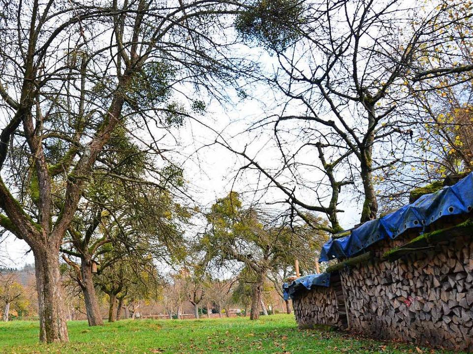 Streuobstbäume   zu pflanzen, bringt Ökopunkte. Diese Wiese ist in Tumringen.   | Foto: Nikolaus Trenz (2)/ Katharina Bartsch/ Sabine Ehrentreich