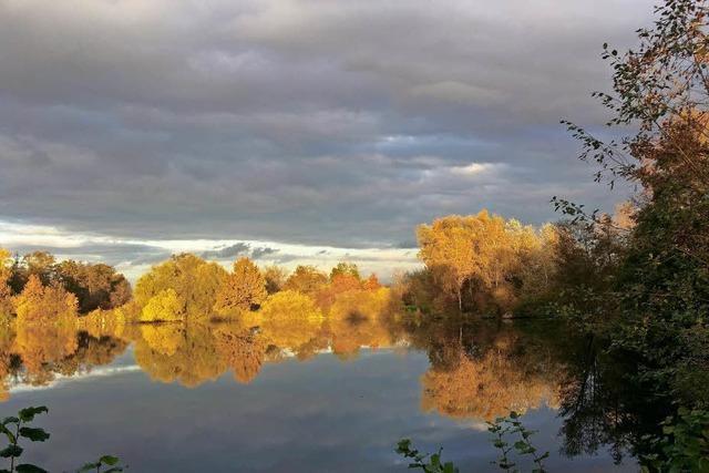 Herbstleuchten bei Ottenheim