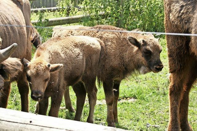 Rinderlehrpfad soll attraktiver gestaltet werden
