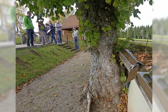 Baumgutachter schaut sich die alten Linden an