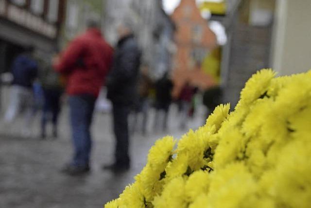 CHRYSAN-THEMA : Leere Blumenschau?