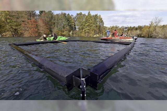 Angelsportverein Freiburg und DLRG installieren Laichinsel im Opfinger See