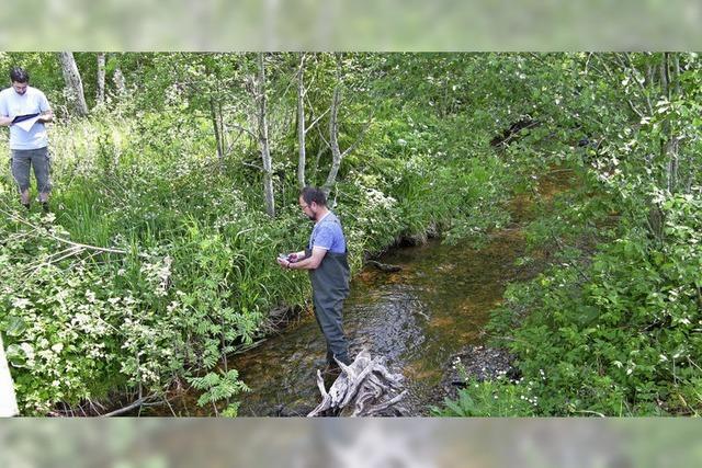 Angler sorgen sich um Wasserqualität