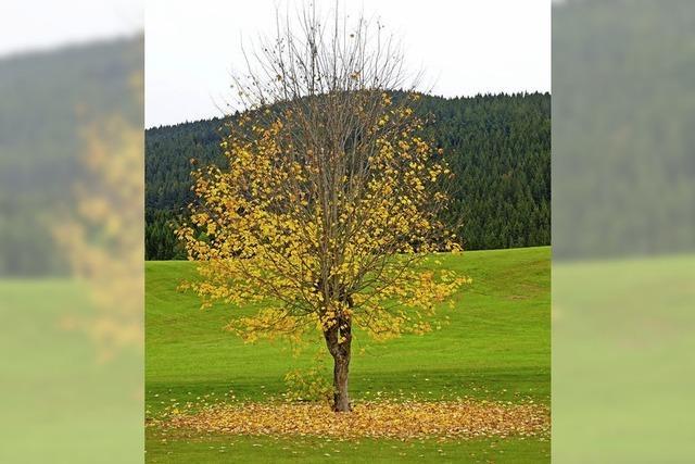 Der goldene Oktober macht seinem Namen alle Ehre