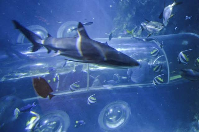 Im Sealife in Konstanz gibt's Einblick ins Leben unter dem Meer