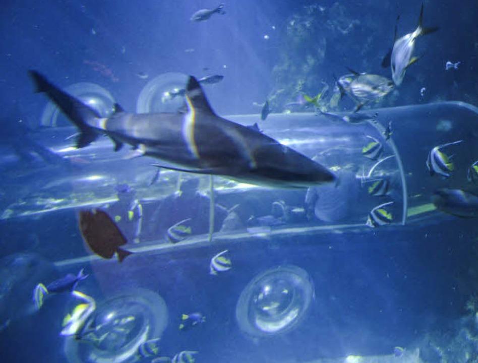Zum Schwärmen: Fische im Sealife   | Foto: Anita Fertl
