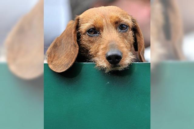 Die Hundesteuer wird erhöht