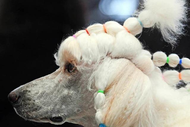 Leipzig sucht den Superhund – wer ist der beste der Welt?