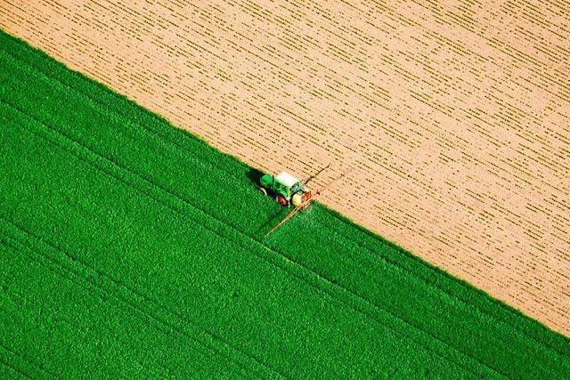 Jamaika ist sich uneins in Sachen Agrarsubventionen