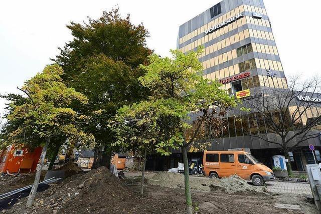 Für die neue Volksbank sollen 47 Bäume fallen