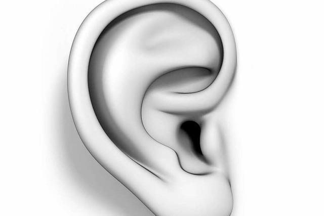 Können Ohrenkneifer kneifen?