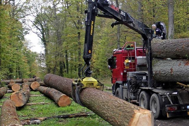 Für Stammholz jeder Art gibt es derzeit gute Preise