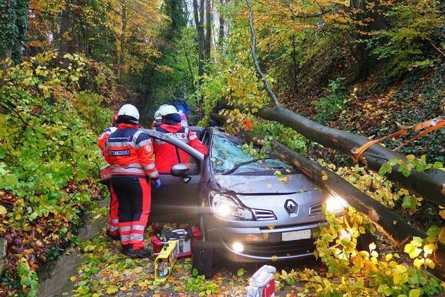 Schwerverletzt: Baum fällt auf fahrendes Auto