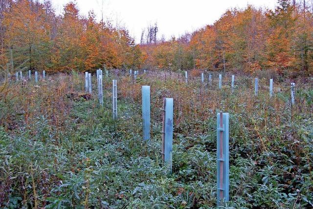 Die Pflege des Waldes hat Priorität